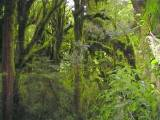 Patea Loop Walk from Mountain House